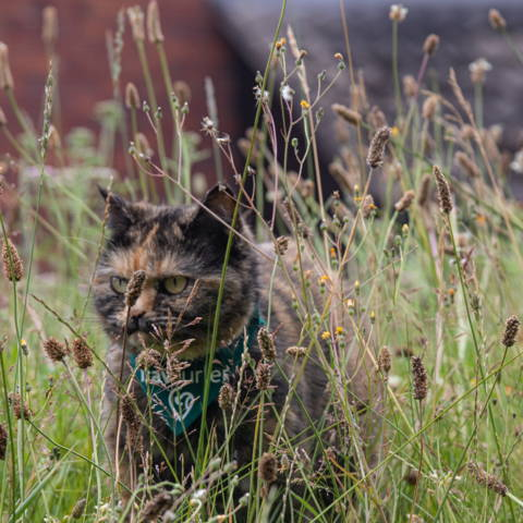 Travelling cat with green pet bandana