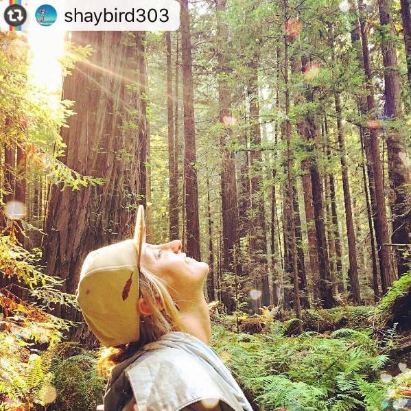 sandlot strapback in humboldt county redwoods