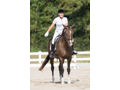 Dressage Riding Lesson and Lunch with Dr. Paula Gregory