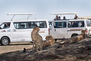 2 Days Camping Safari in Maasai Mara