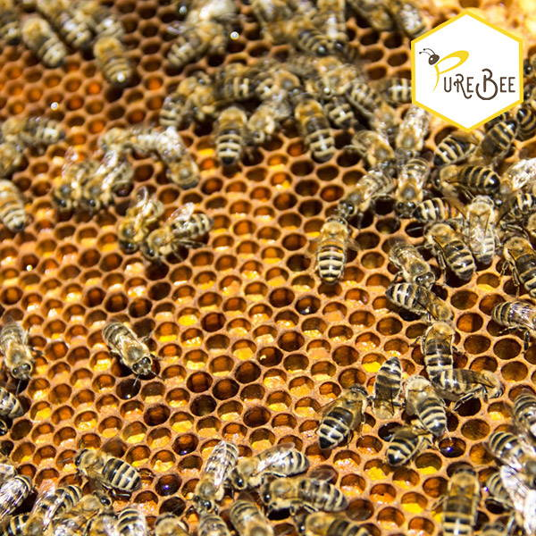 bees on a honeycomb filled with pollen and honey