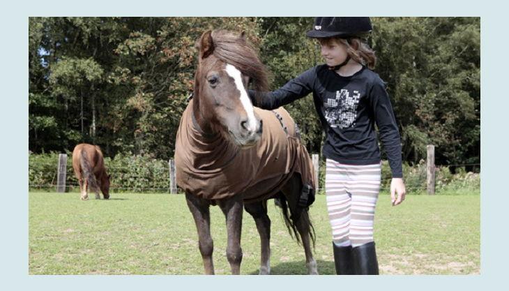 ponnyland pferd und kind