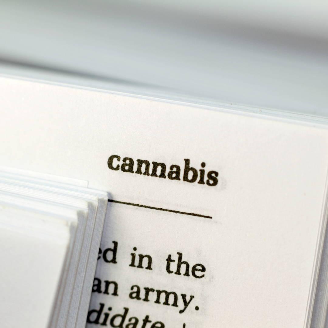 cannabis chanvre plante santé