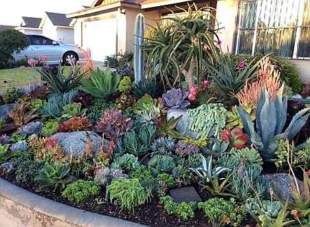 South Africa - Water wise garden.jpg