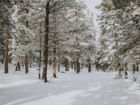 Camping d'hiver en famille. Dormir en forêt avec des sacs de couchage dans la neige et en montagne.