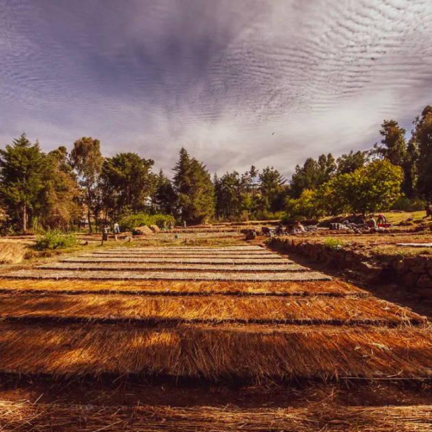 Davines Ethiotrees carbon footprint