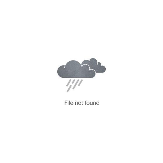 Close up of hair and hair folicles
