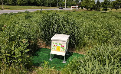 Bee hive at Trafalgar Branch