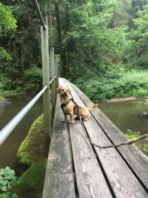 Wandern mit Hund im Waldnaabtal