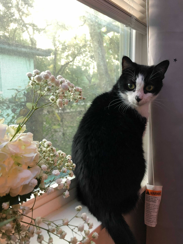cat in the window sill