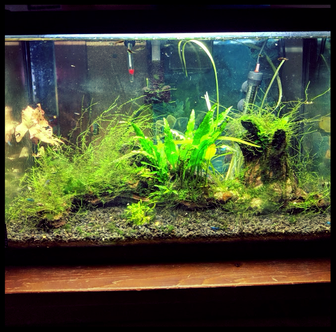 20 Gallon Endler Tank