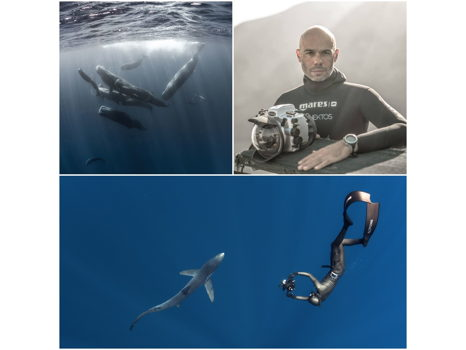 SWIM WITH SPERM WHALES OR BLUE SHARKS IN THE AZORES – ACCOMPANIED BY FREEDIVING CHAMPION FRED BUYLE