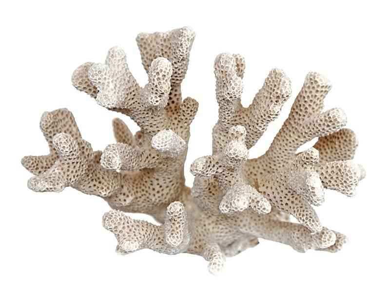 Magnesium und Calcium oder Kalzium aus Sango Koralle