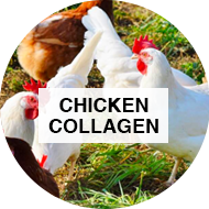 chicken collagen