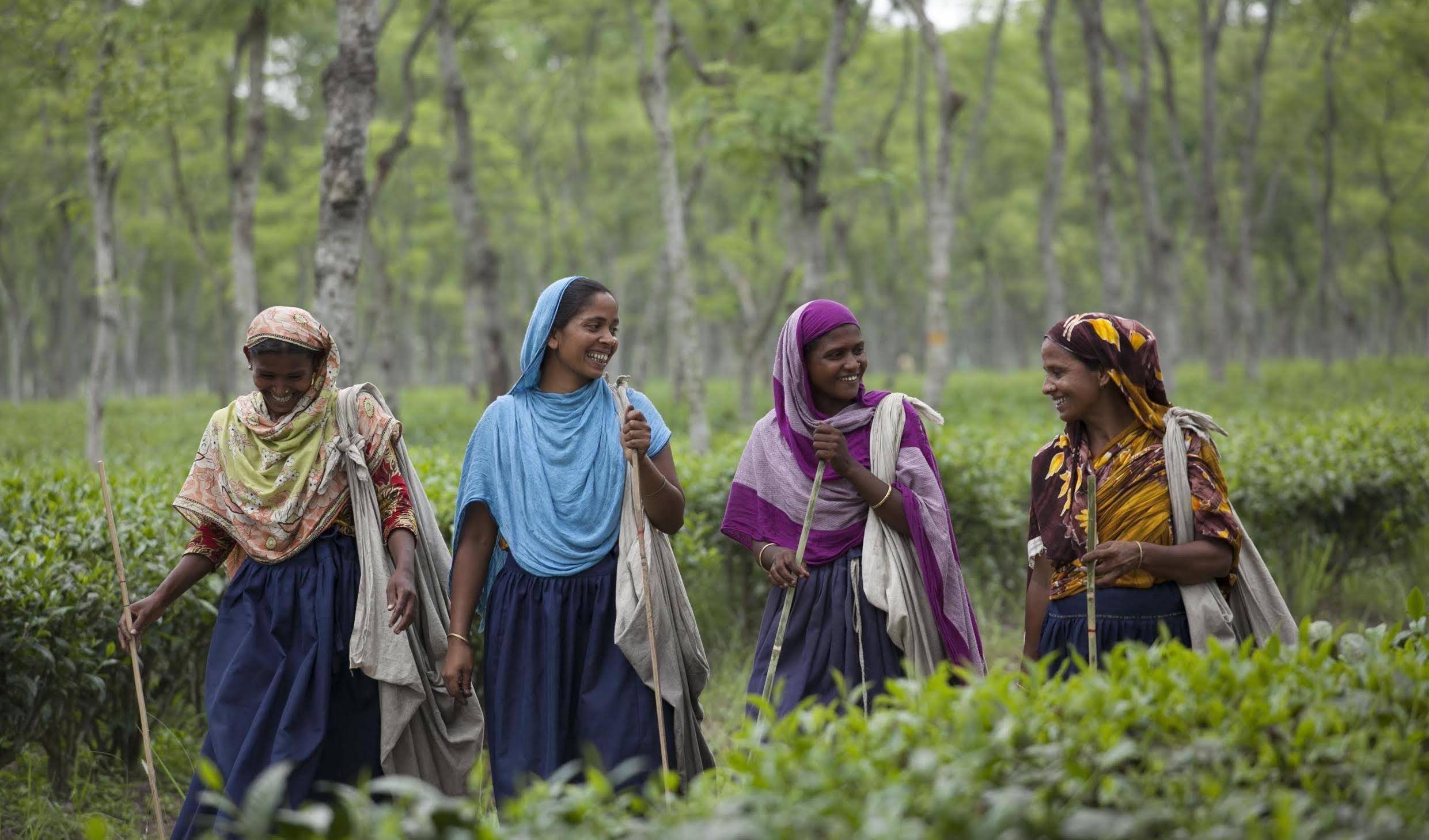 Womena at the Teatulia tea farm in Bangladesh