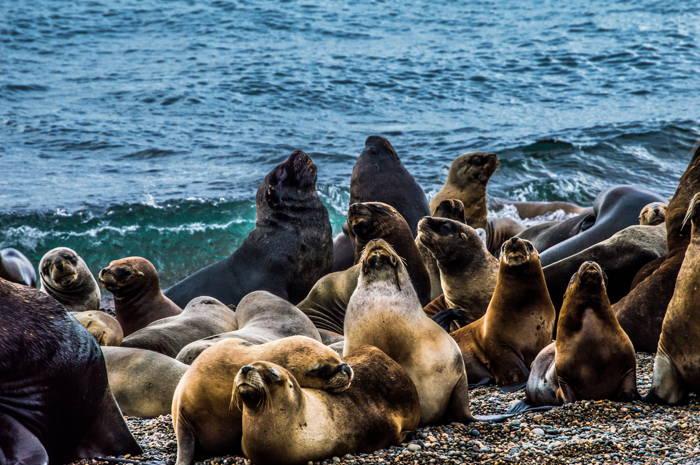 lobos marinhos na beira da praia