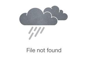 Coffee Farm in a Tropical Oasis