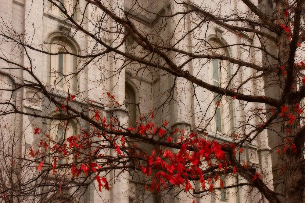 Up-close photo of the Salt Lake City Utah Temple behind autumn branches and leaves.
