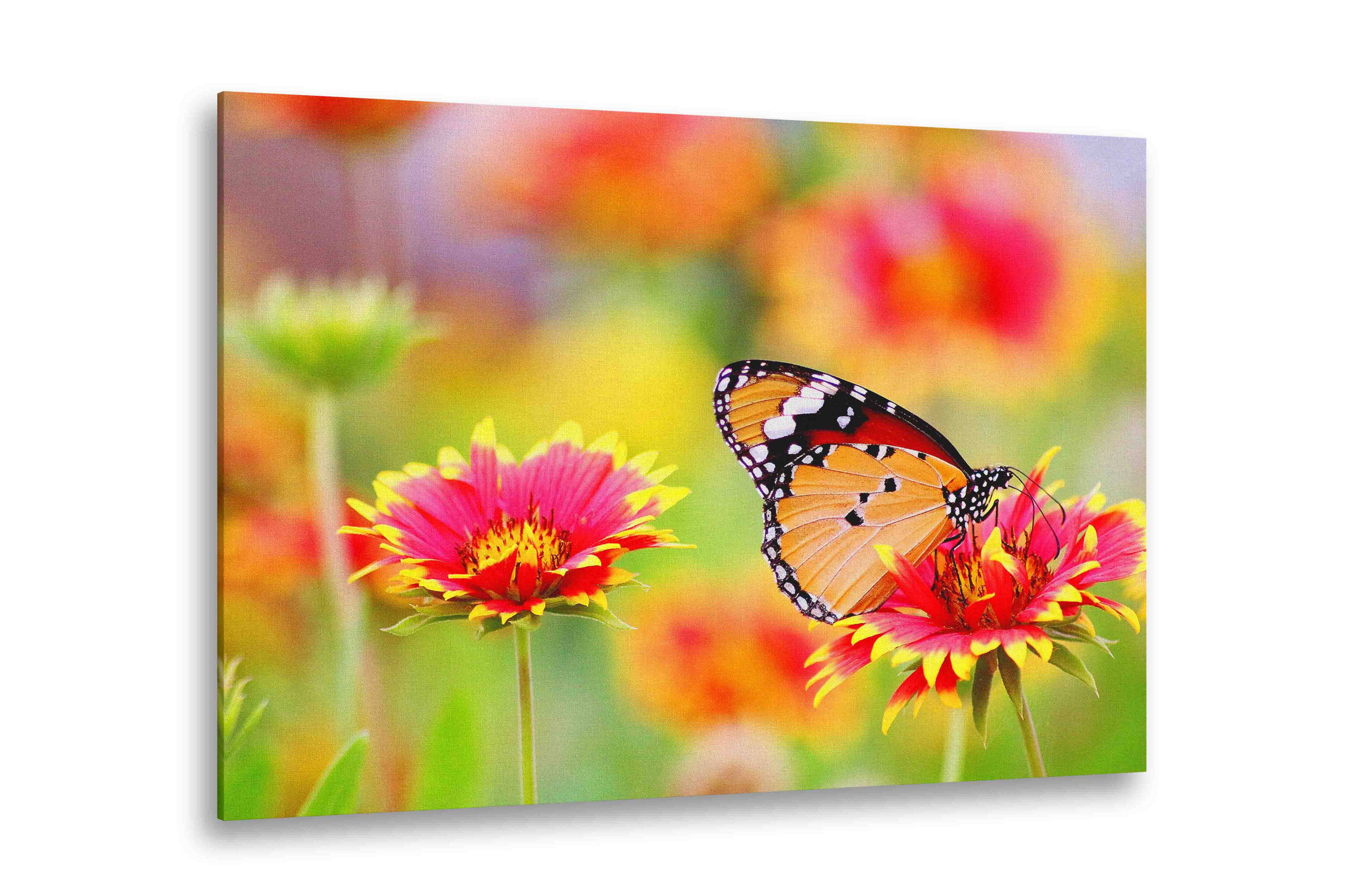 Nature Prints On Canvas