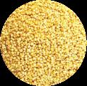 Foxtail Millet Kangni