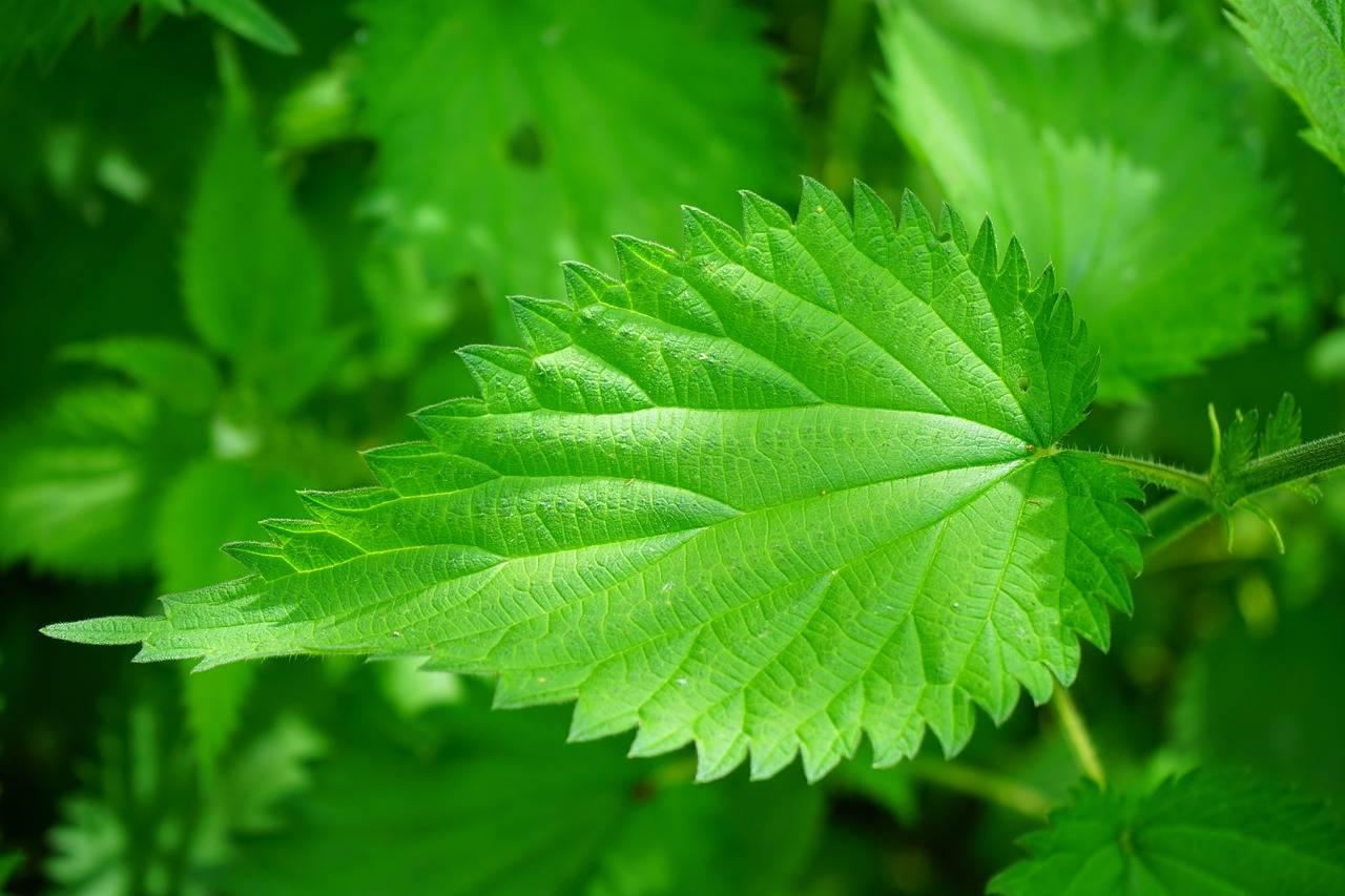 Herbes Healtea
