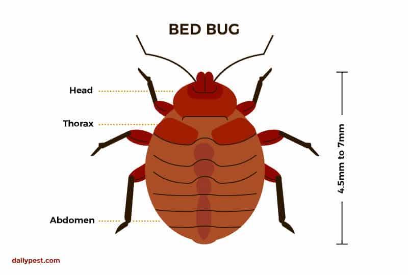 Bed Bug characteristics: Premo Guard Bed Bug Spray