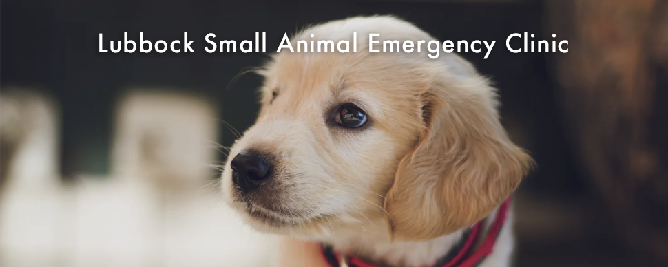 Lubbock Small Animal Emergency Clinic