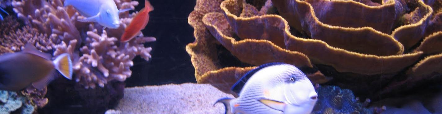Музей аквариум + океанариум