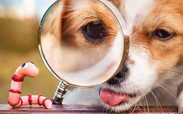 Link zu: Würmer beim Hund