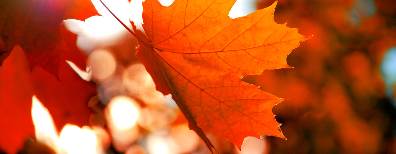 Stuttgart - Autumn_Homepage_Keyvisual_1280x500px_Motive_1.jpg