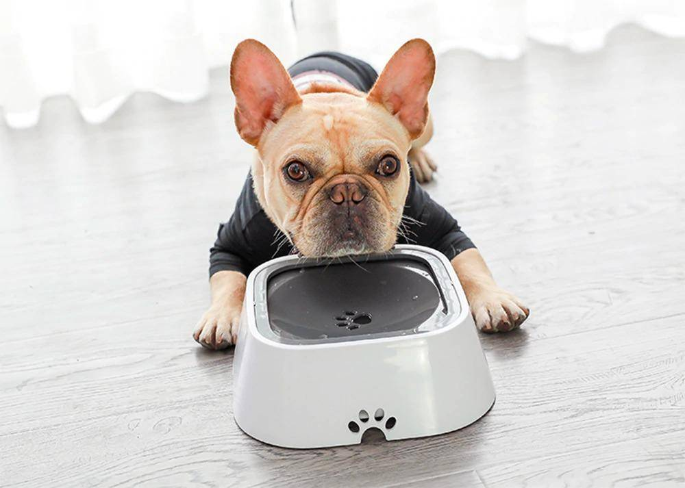 spill proof dog bowl slopper stopper no spill dog bowl