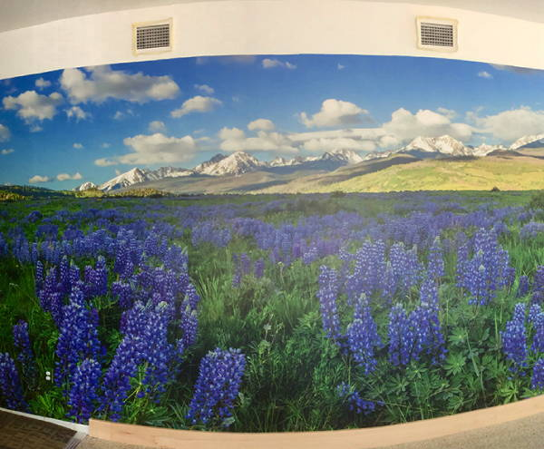 Interior Vinyl Wall Wrap -  Wildflowers Wall Wrap - Colorado Nature