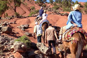 Mule Trek with Lunch in a Berber Home