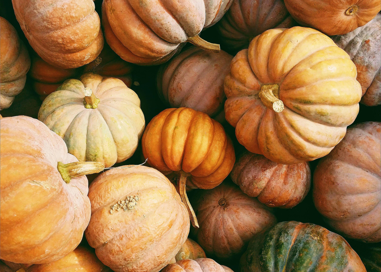 Display of various pumpkins for autumn season