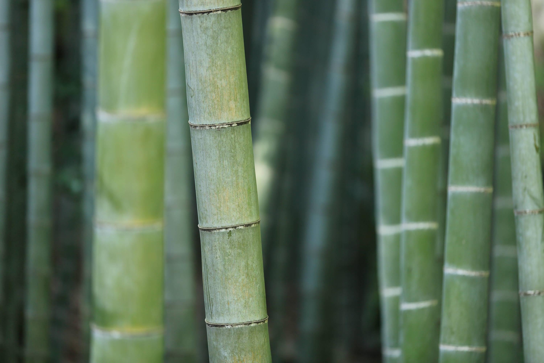 produits-en-bambou-france