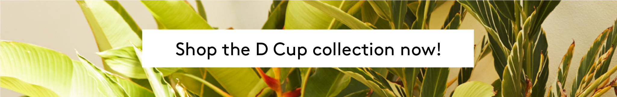 Shop the D CUP collection now!