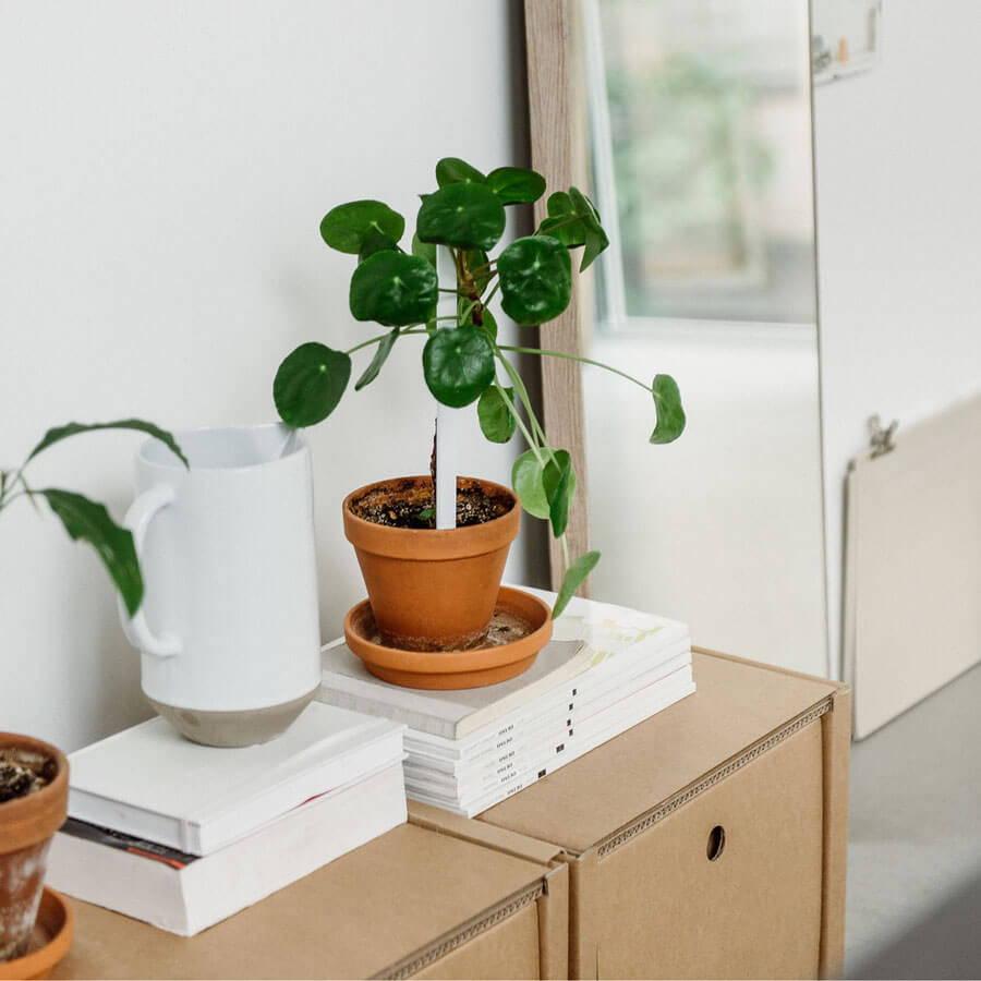 ROOM IN A BOX Co-Warum sind Pappmöbel nachhaltig?