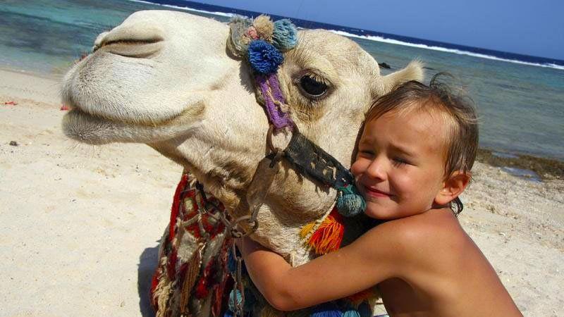 Hug a camel, Hurghada, Egypt