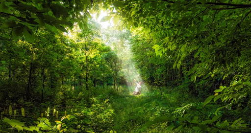 Panoramic picture of the Sacred Grove. A light shines down on young Joseph Smith.