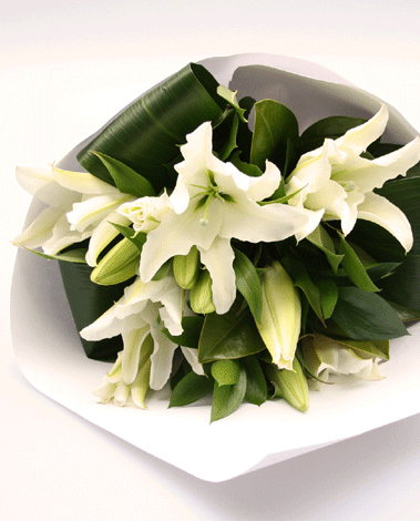 HF Special White lily