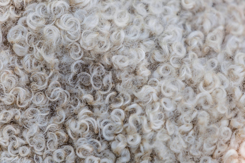 monte & coe wool