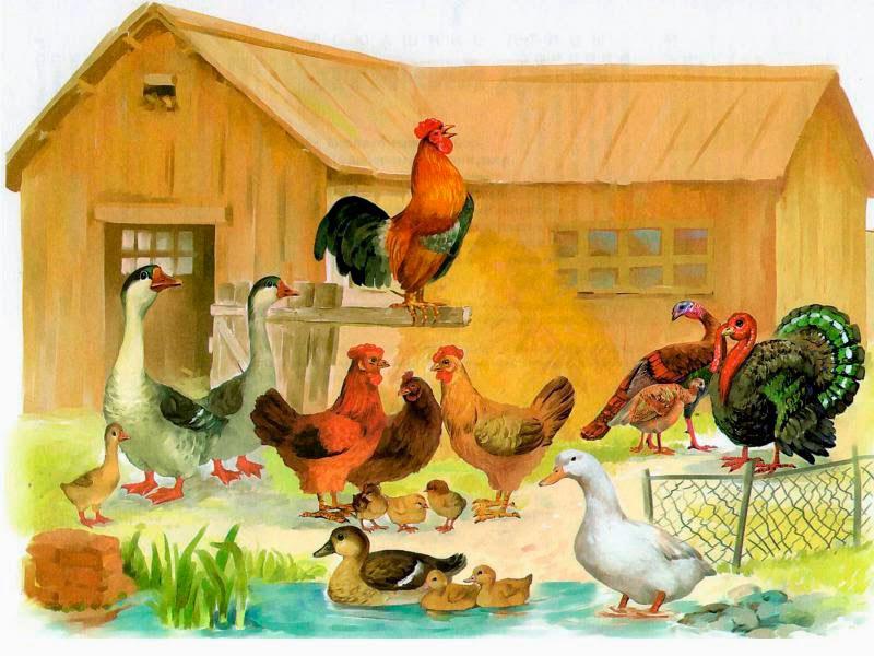 чувствует рассматривание картинки птичий двор система сочетала себе