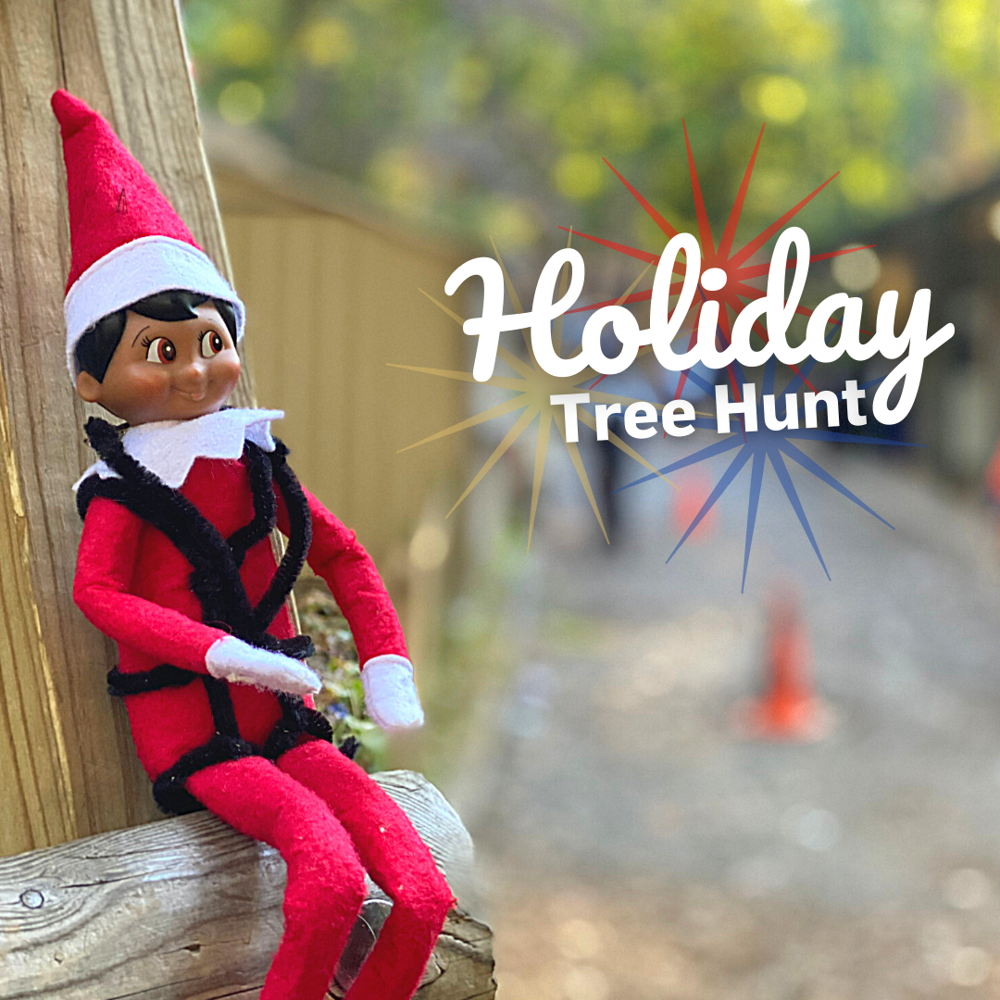 Picture of Help us find our forest friends with our Holiday Tree Hunt