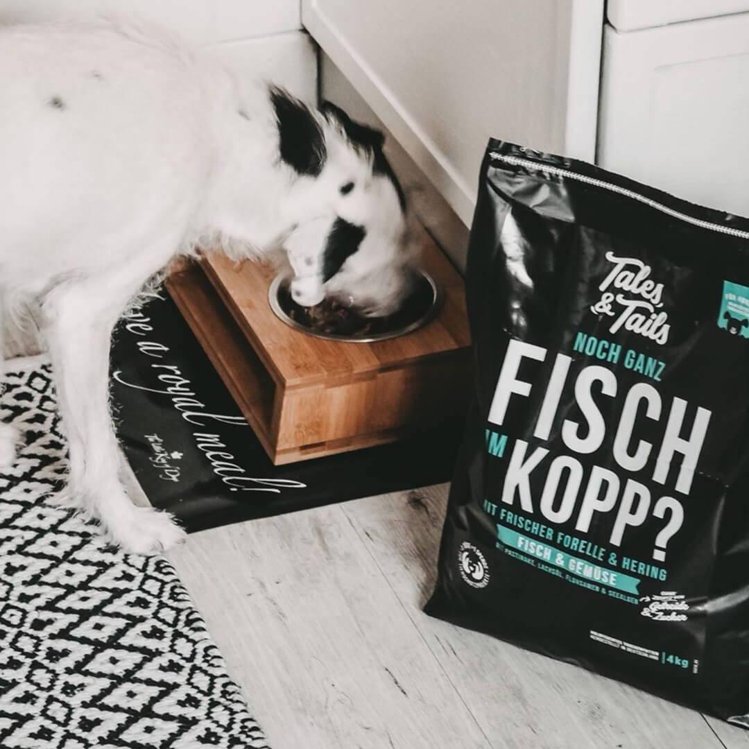 Trockenfutter mit Fisch für Hunde