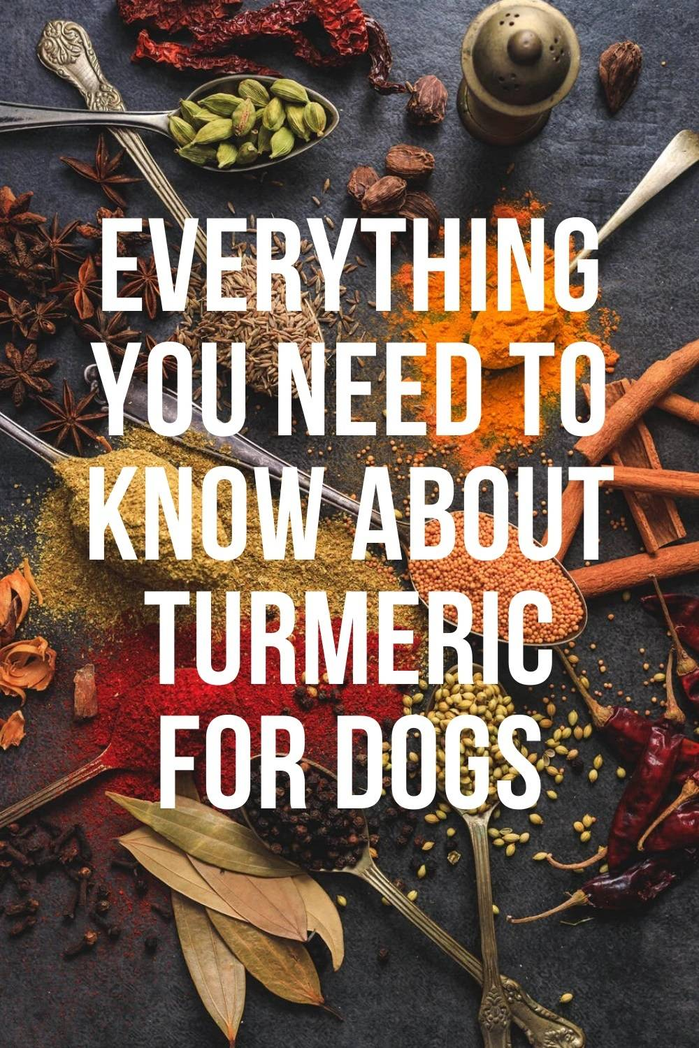 Everything you need to know about tumeric for dogs
