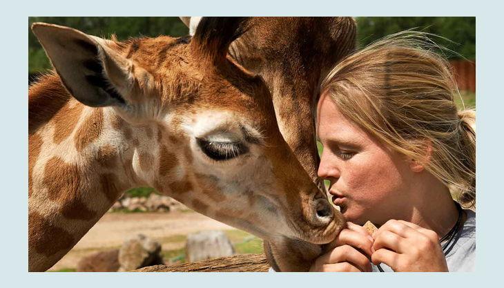 zoom erlebniswelt giraffen