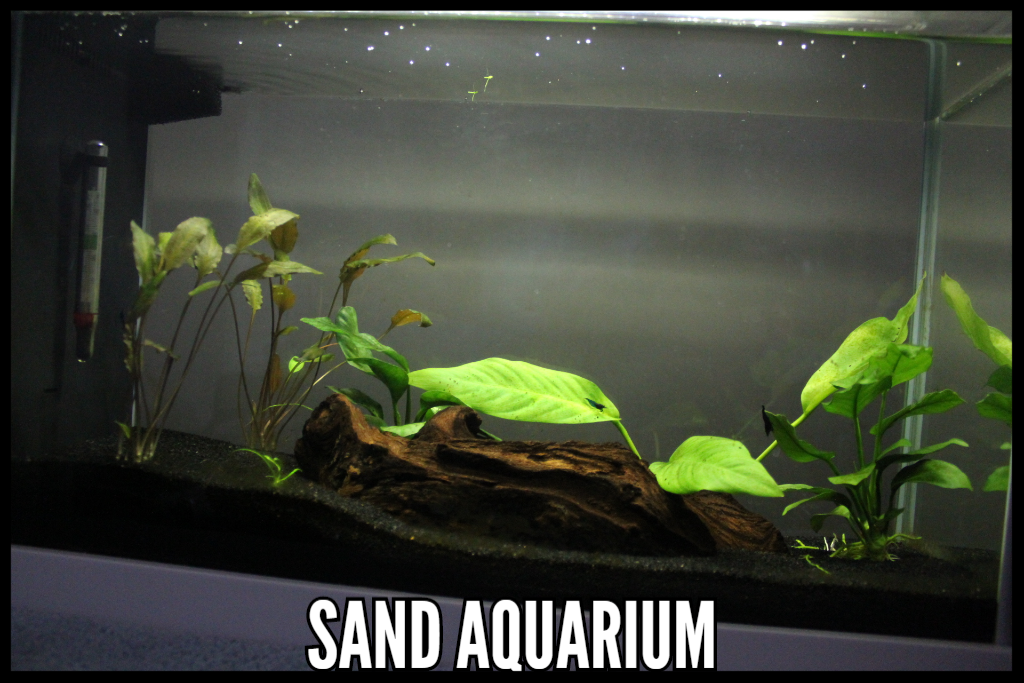 Best Substrate, Sand Aquarium