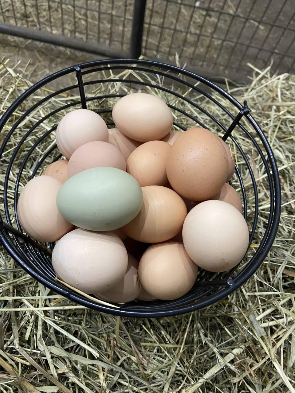 Pasture eggs, free range eggs, Arthur ON