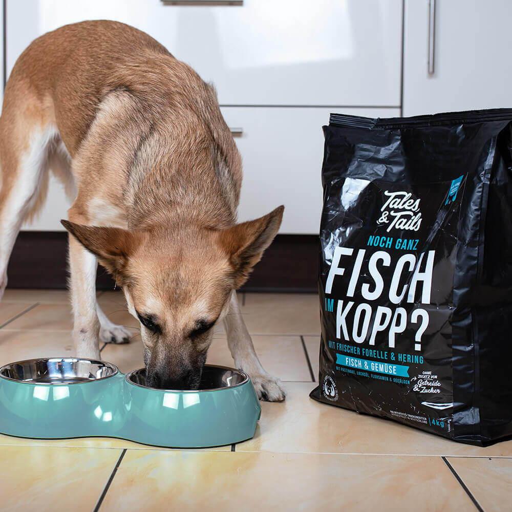 Hund frisst Trockenfutter mit Fisch