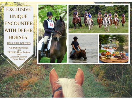 Exclusive Unique Encounter With DEFHR Horses!